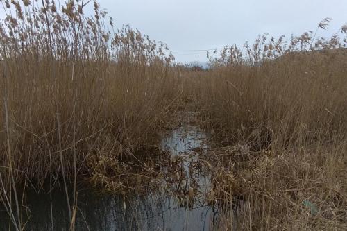 Stufăriș, habitat al păsărilor acvatice