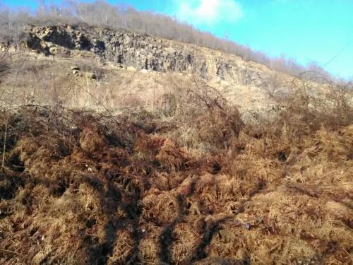 Habitat cu invazie de ferigi in sud de Coasta Prisacii (la sud de Cariera Huta)