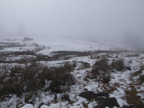 Fig. 24. Zona mlastinoasa (alt. 514 m)