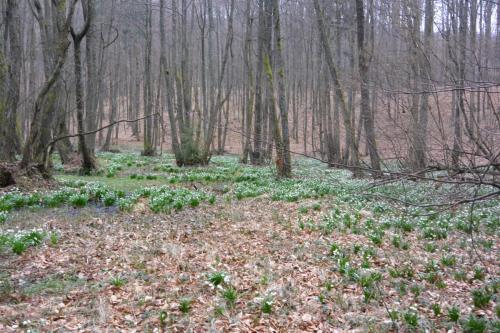 Microdepresiune cu mlaștină, dealul Pricopului