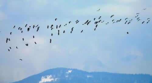 Nagati in migratie
